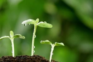Plant peptides